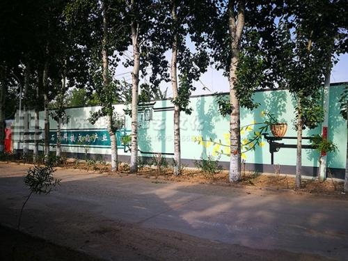潍坊潍城区于河街道神元铁皮石斛园区外街道壁画